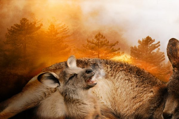Petitionen gegen Buschfeuer!?